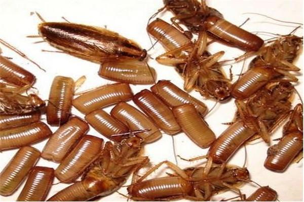 西安灭蟑螂公司