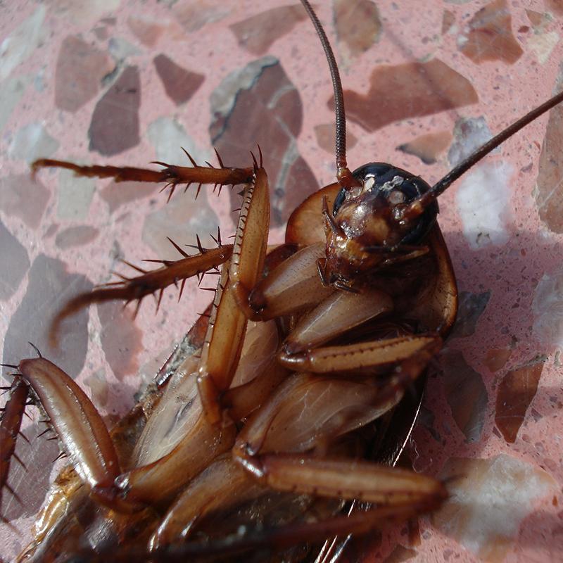 西安灭蟑螂公司哪家好