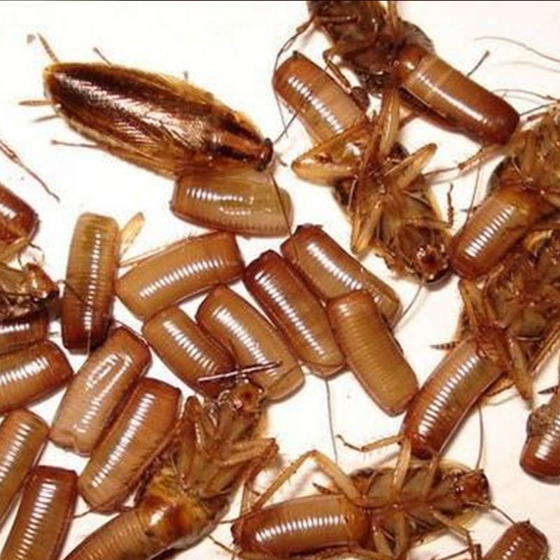 陕西灭蟑螂公司