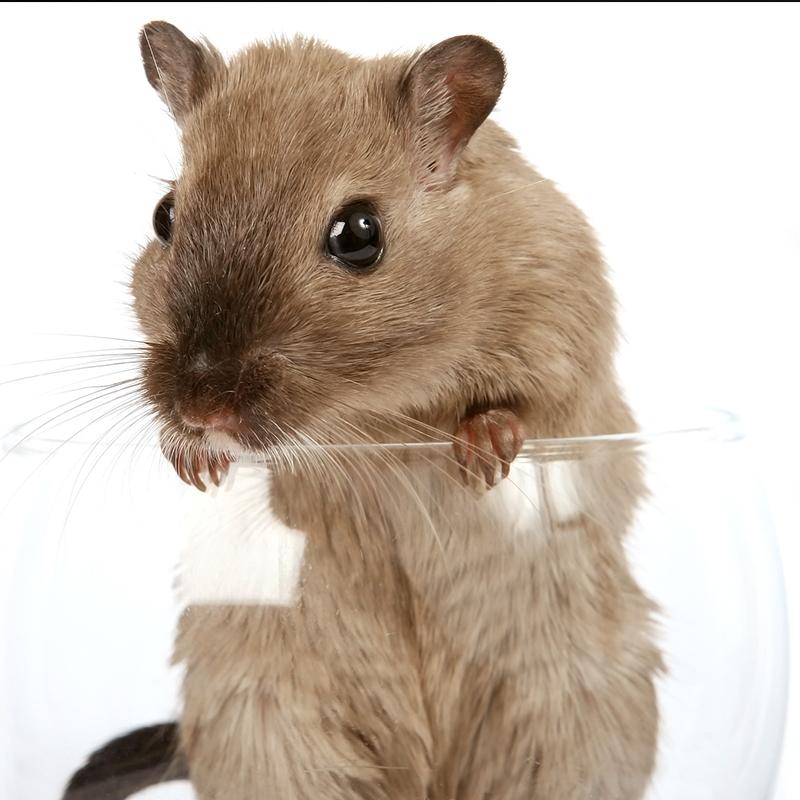 陕西灭老鼠